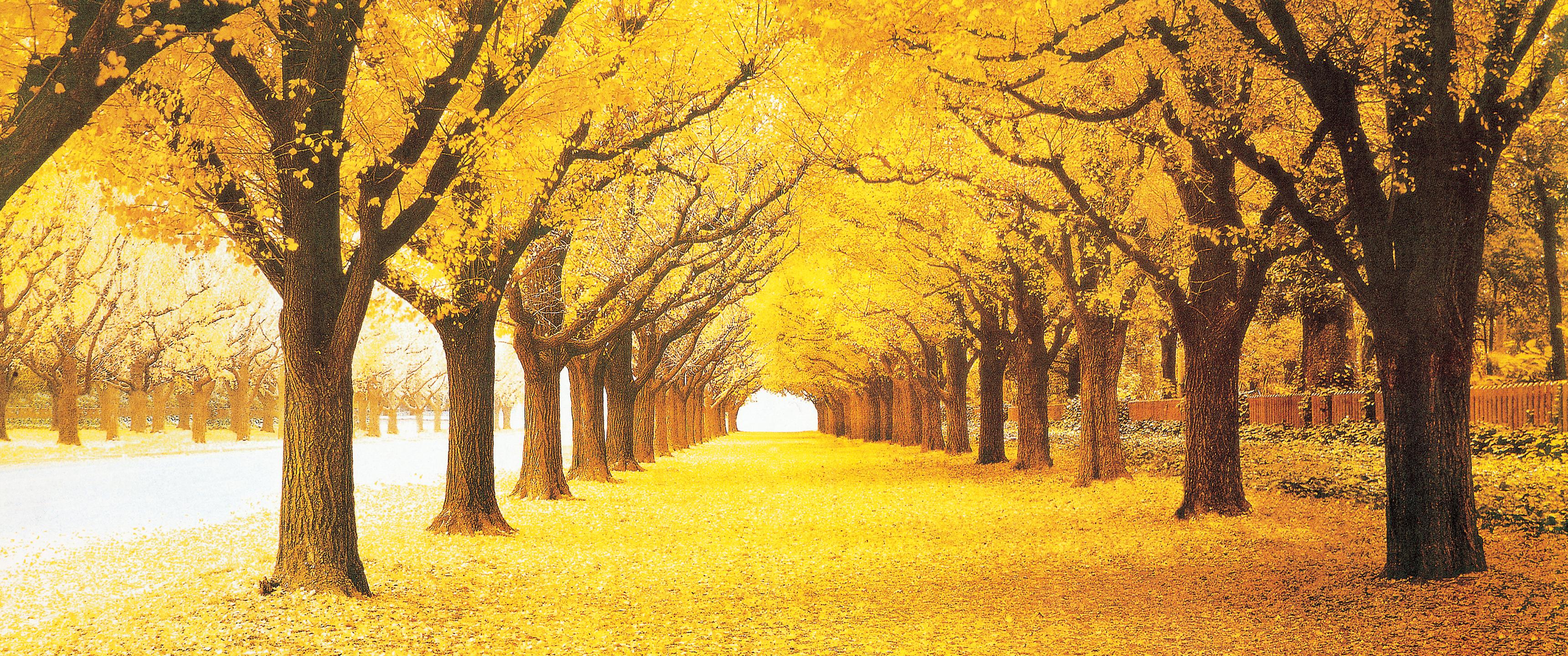 舒婷:秋天的情绪(二)